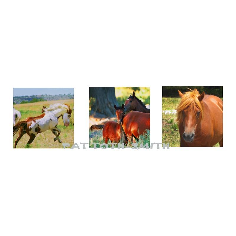 Wild Horses in America