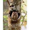 Concealed Owl hidden in tree  (canvas)