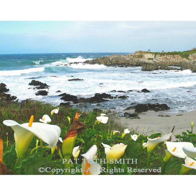 Calla Lillies along the Pacific Coast