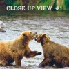 Taken in Alaska, two large bears frolicking