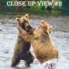 Taken in Alaska, two large bears frolicking