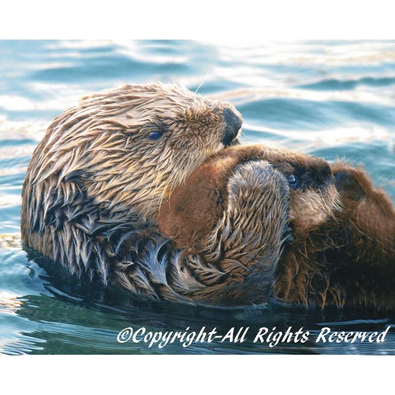 Sea Otter Pup (metal art)