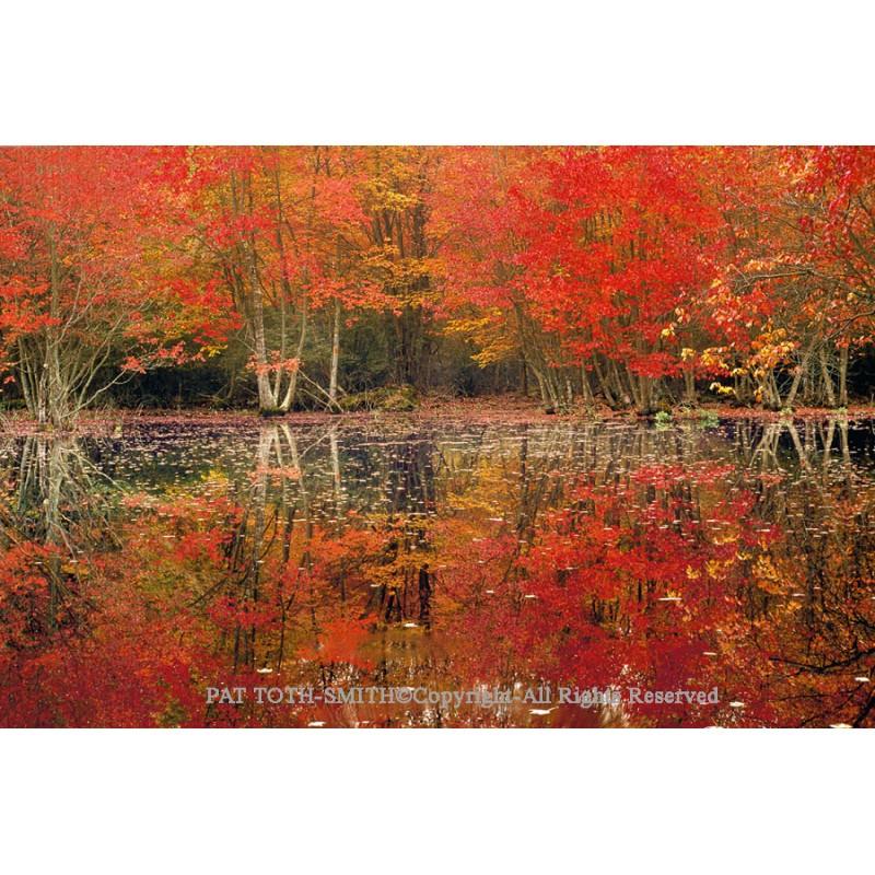 Autumn Colors  (canvas)