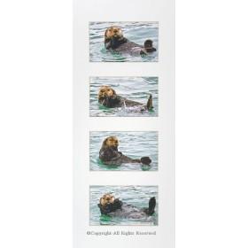 Sea Otter Shuffle