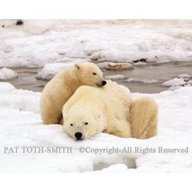 Polar Nap