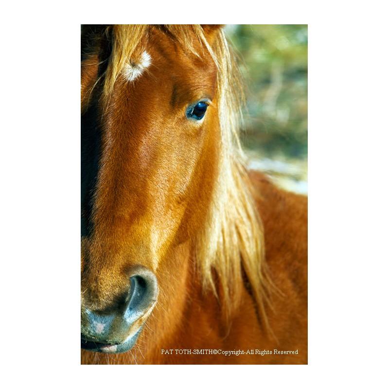 Wild Mustang Close-Up