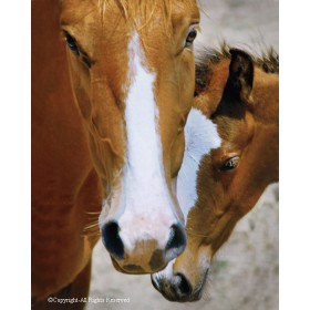 Wild Mustang Affection (canvas)