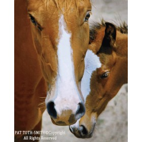 Wild Mustang Affection