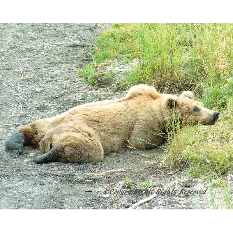 A Bear Morning